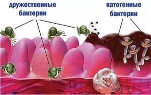 Виды бактерий в организме