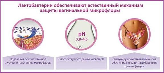 Роль лактобактерий